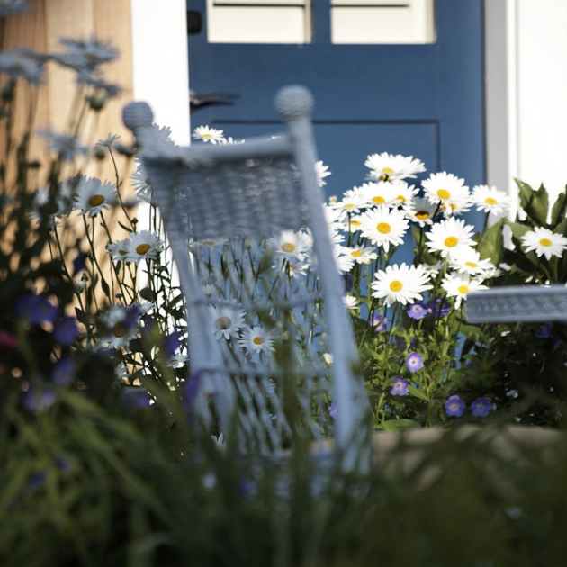 spring day with daisies in a flower pot and white wicker chair