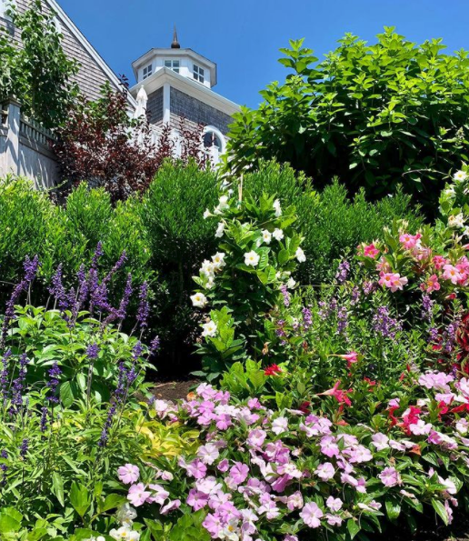 beautiful blooms on Wequassett property